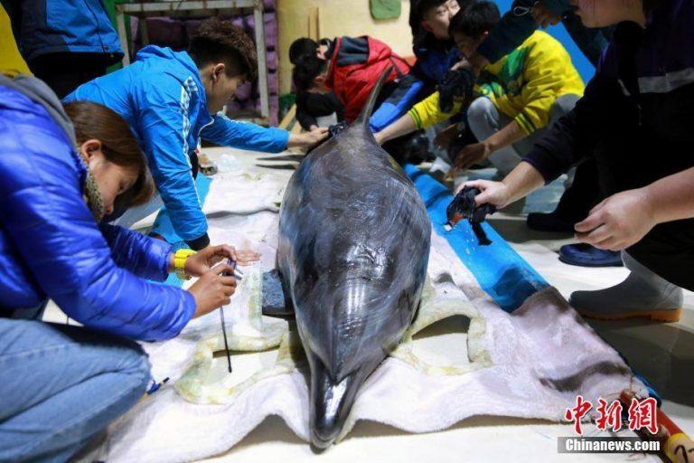 delphine für chinesischen Park