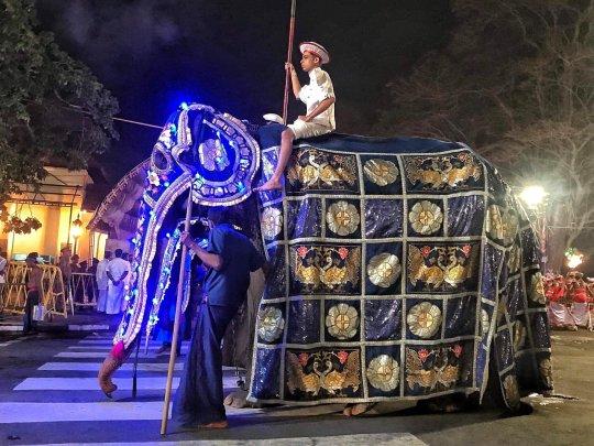 elefant mit kostümg