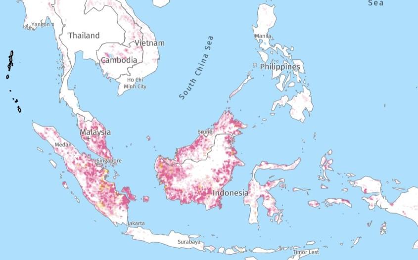 Entwaldung-77