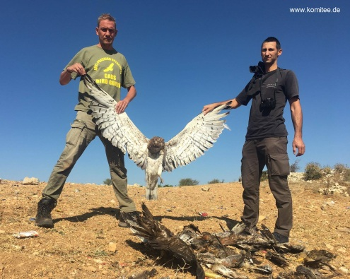 erschossener Adler-Libanon jpg