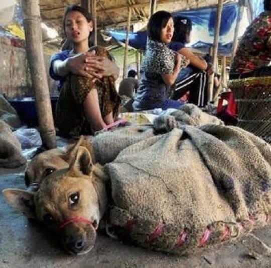 fauen und Hunde im Sack-China
