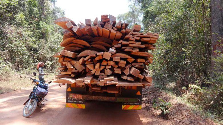 Kambodscha Waldkriminalitätjpg