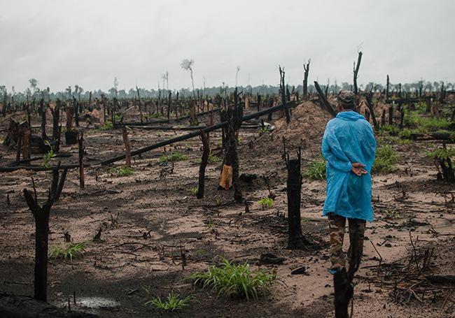 Kambodscha. wüstenwaldjpg