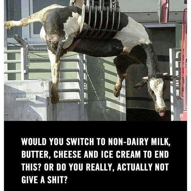 Kuh am Krahn mit schönem Zitat