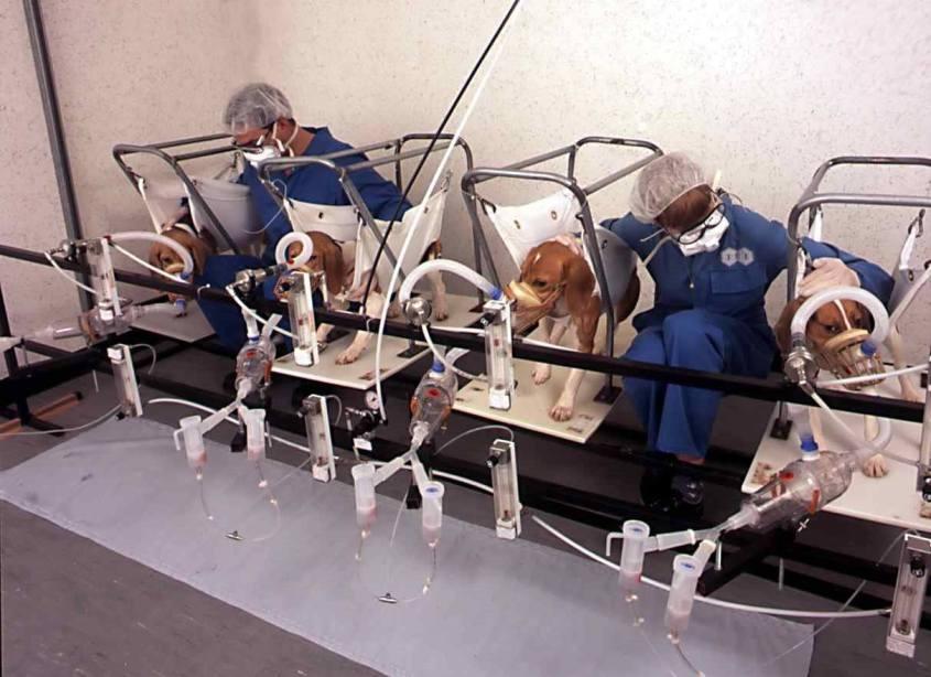 Labortesthunde für Zigaretten.o