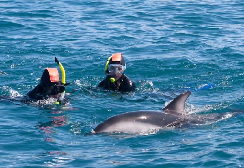Neuseeland delphinen und taucher