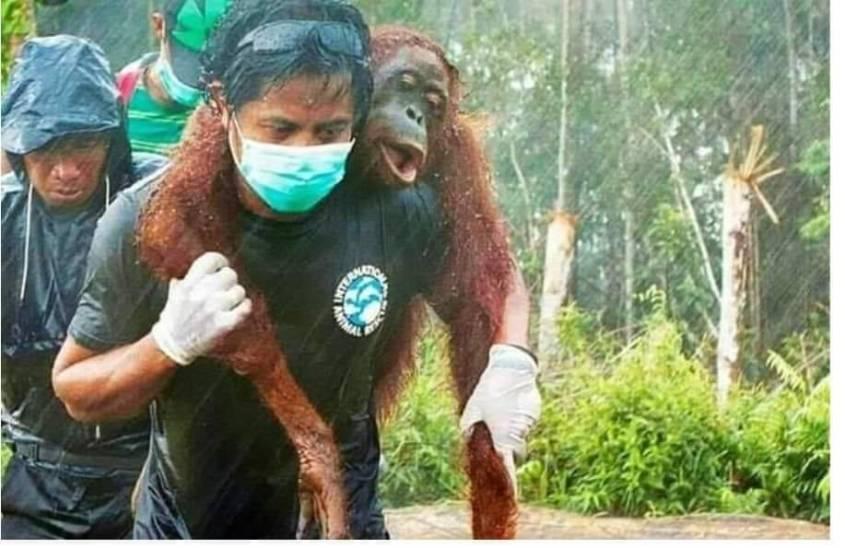 rettung eines Affenjpg