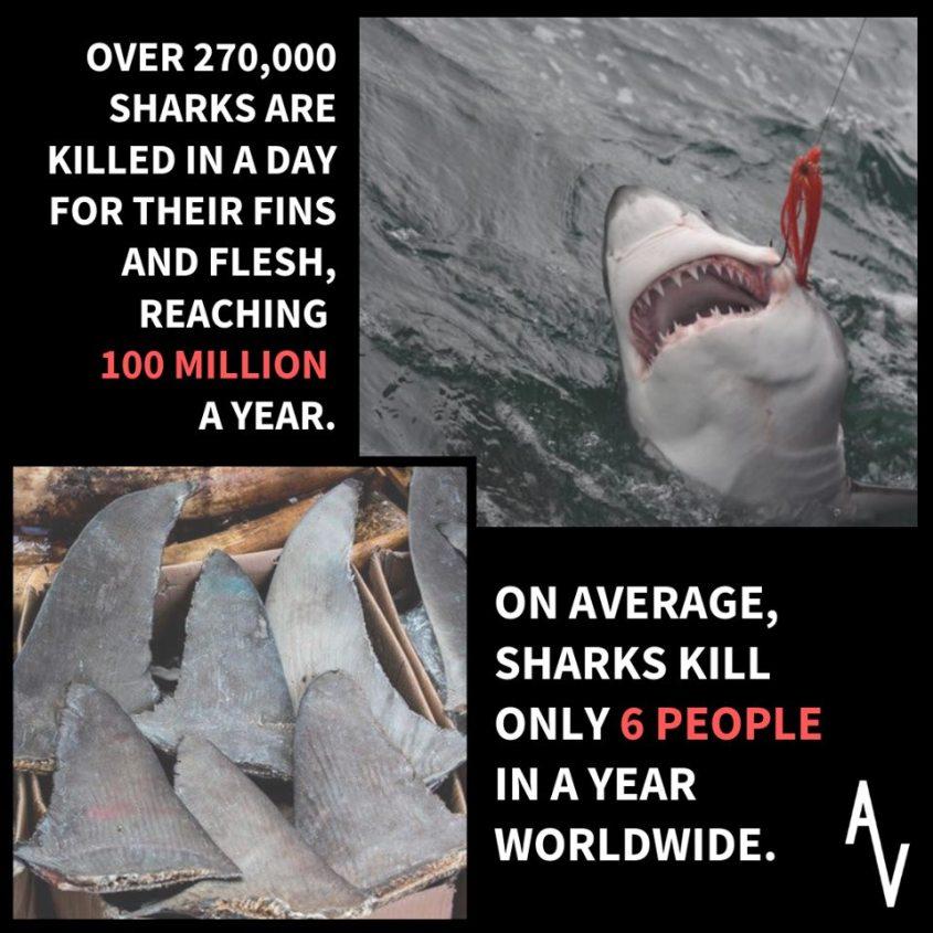 Slogan über Haien