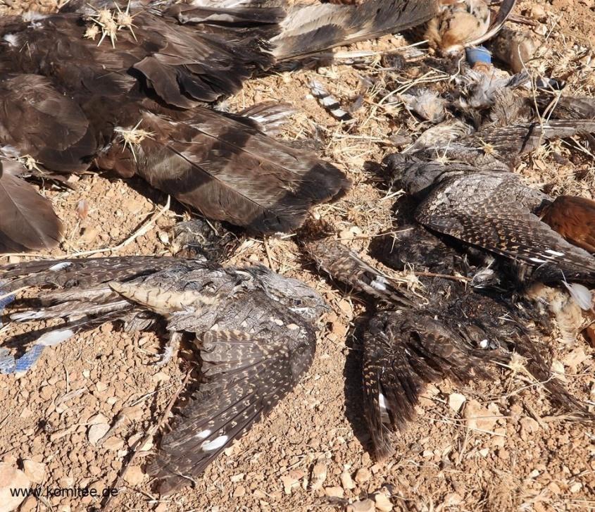 tote Zugvögel-Libanon jpg