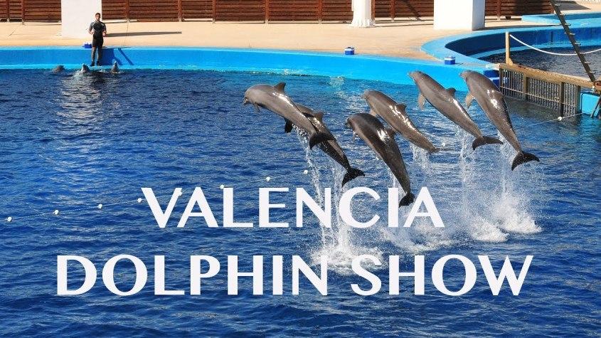 valencia dolphin show