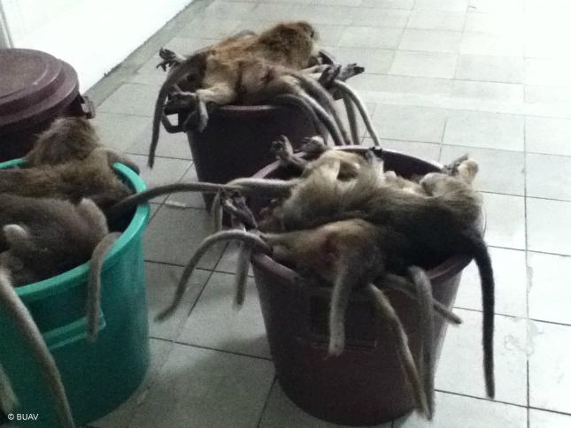 Affen in Müllkontainer