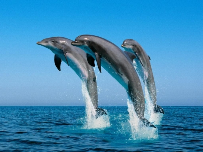 dolphins free