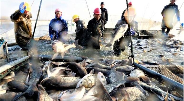 Fisch2 Somalias fischerjpg