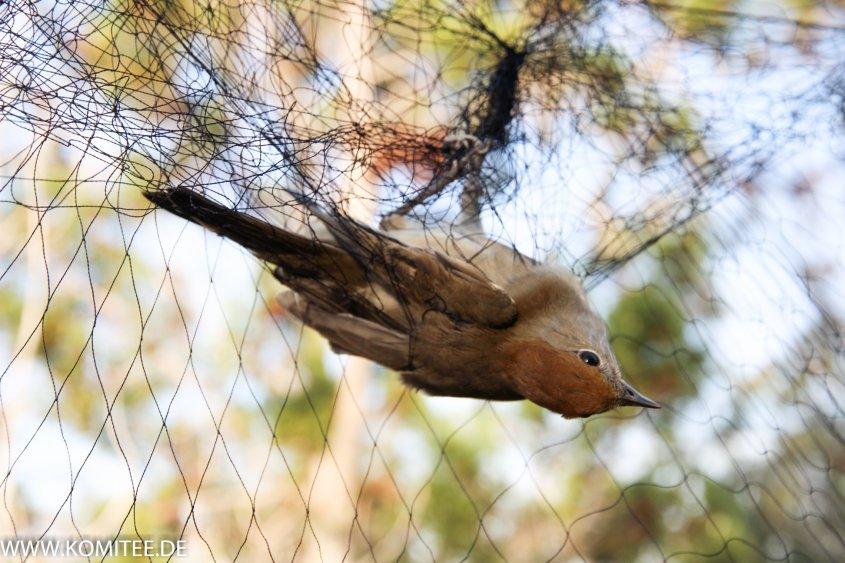 gefangener Vogel