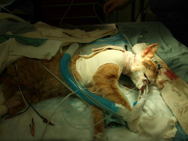 Katzenversuche-PETA-USA-600
