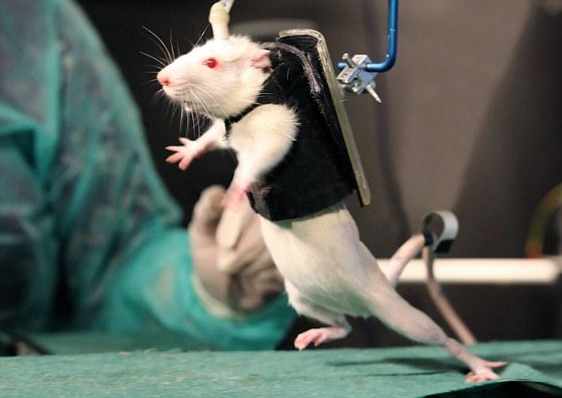 maus mit elektrodenpg