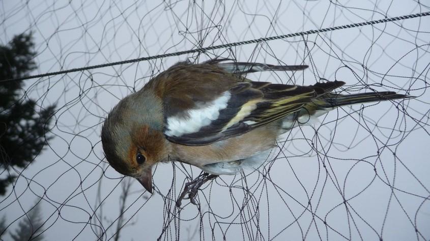 vogelfang-