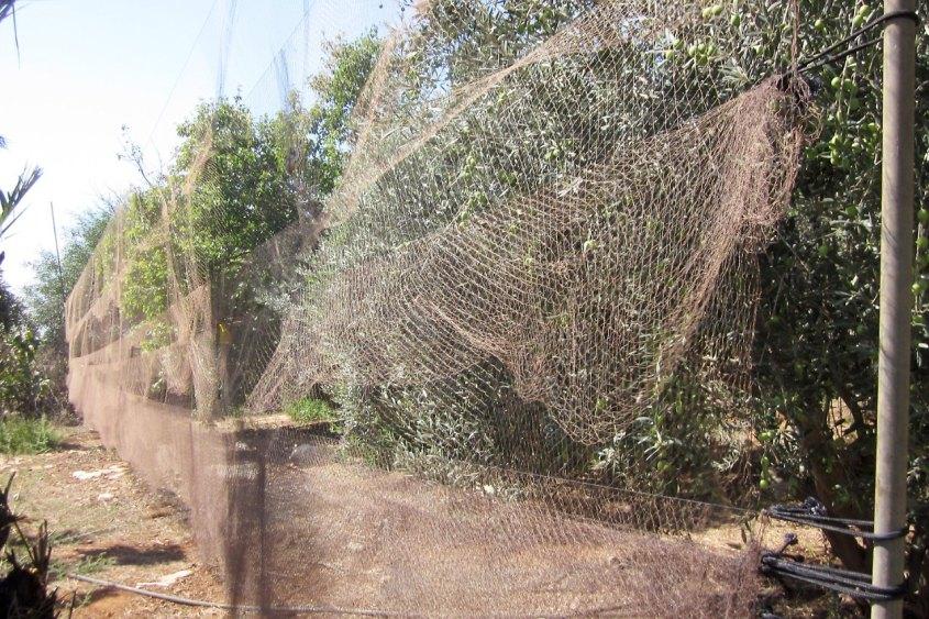 vogelfangnetztpg