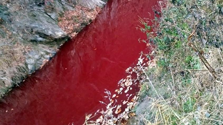blutroter Fluß Schweine Koreajpg
