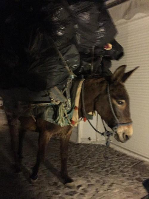 _Überladener Esel Santorini