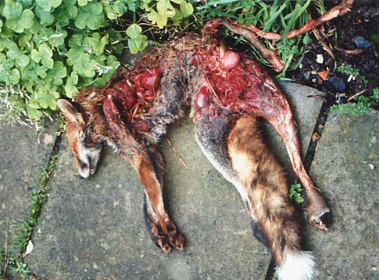 East Kent Murder