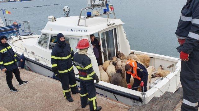 ROMANIA-SAUDI-ARABIA-SHEEPS