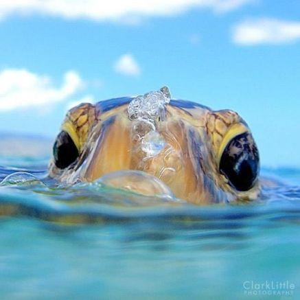 turtle dec5