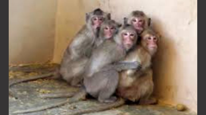 Affen in Labor alle zusammenjpg
