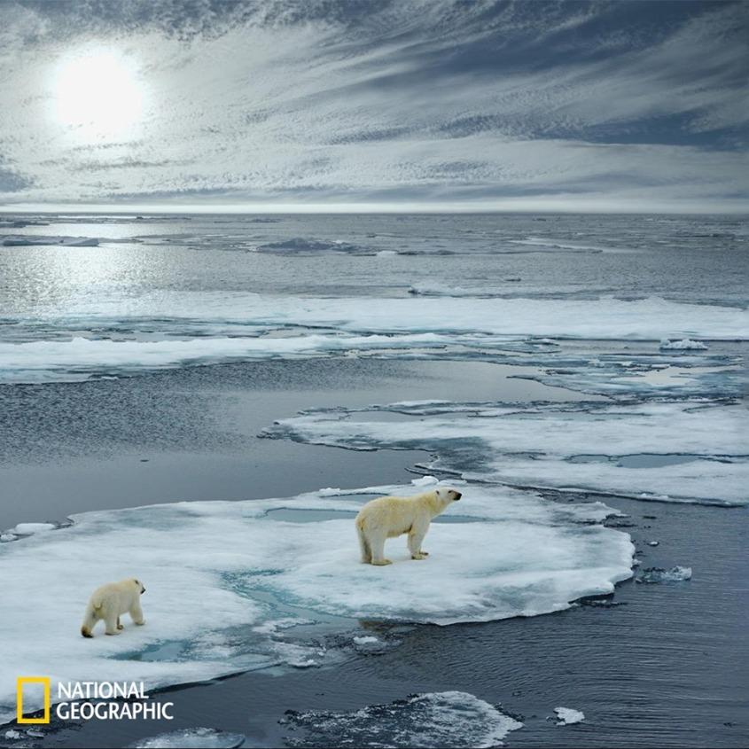 bären in geschmolzenem Eis