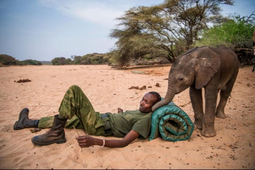 Elefant und waisen Elephanten baby-
