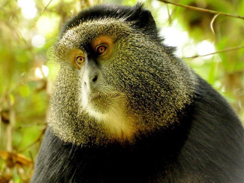 Gorilla-Uganda3-960x720