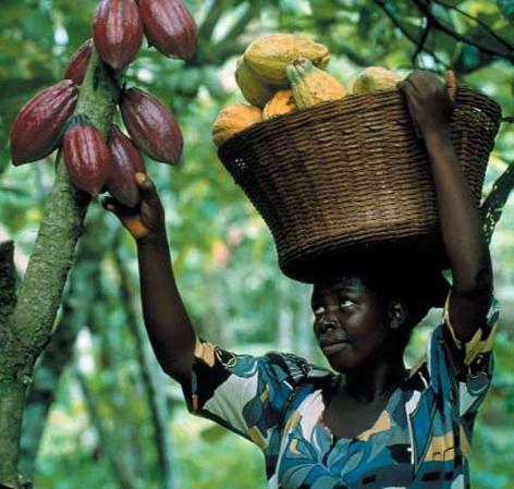 Kakao-farm