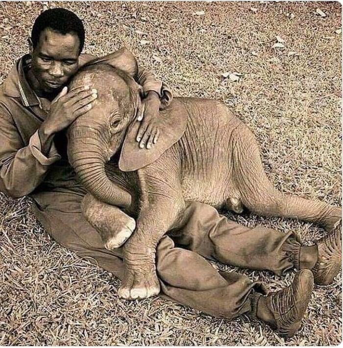mensch und elephanten babypg