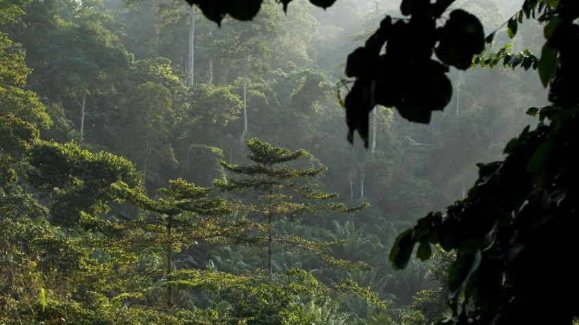 regenwald-in-ghana-100~1280x720