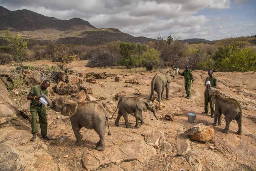 reteti elephanten pfleger pg