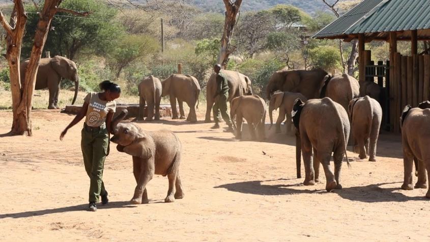 reteti elephantenpg
