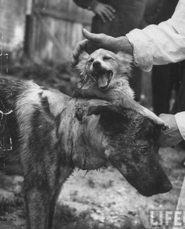Tierversuche Hunden
