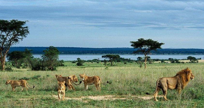 uganda Murchison-Falls-National-Park-995x530