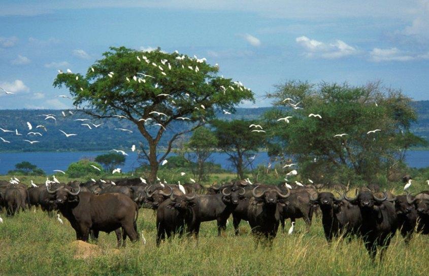 Uganda Murchison-Falls-National-Park4