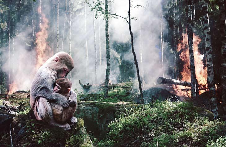 zerstoerung-regenwald.brändejpg