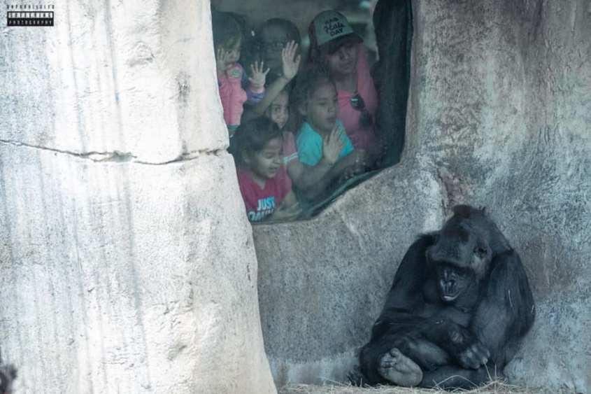 Blöde Kinder beobachten Gorilla_n
