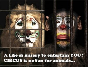circus is no fun for animals