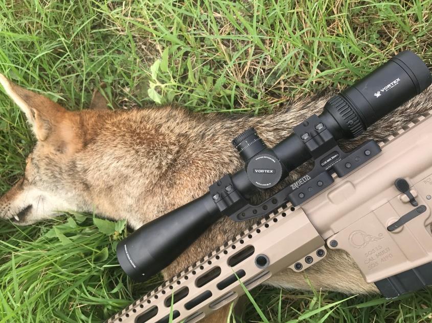 coyote erschossen pg
