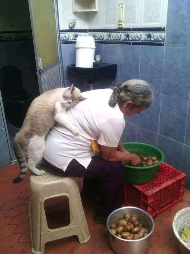 Frau mit Katzejpg