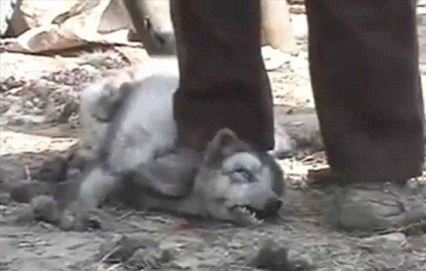 Hunde-Pelz in Chinajpg