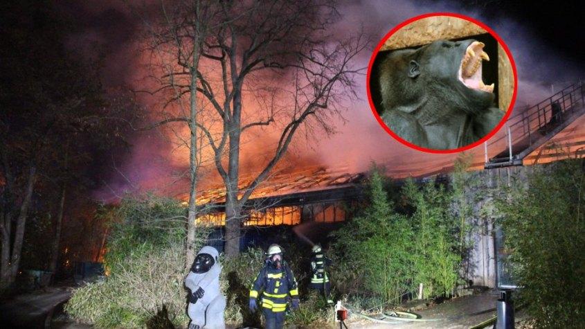 Krefelder-Zoo.Affen verbrannt jpg