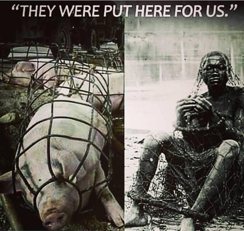 parallele Sklaverei Tier mensch_n