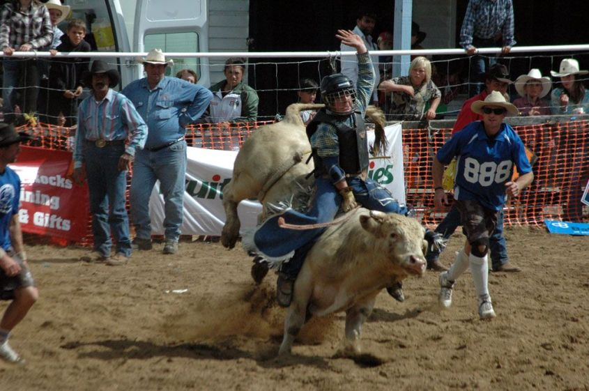 rodeo mit bullen new zealandpg
