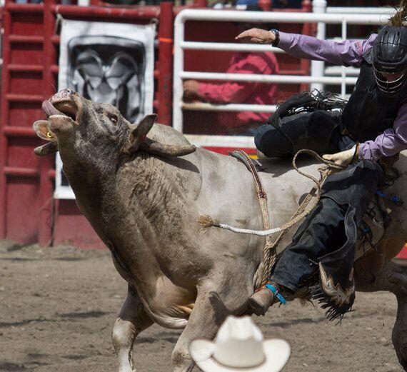 rodeo new zealandjpeg