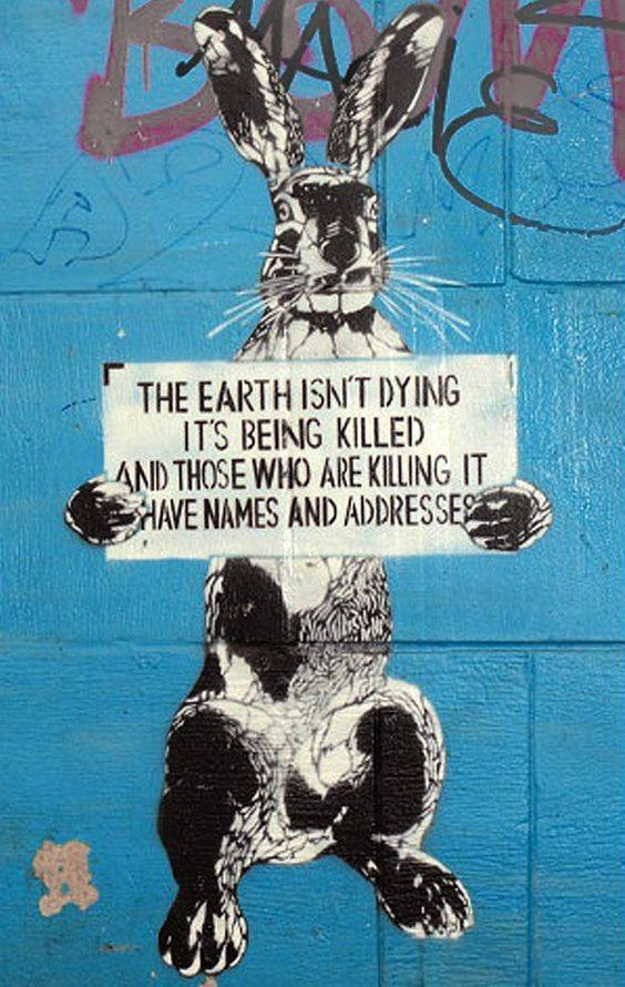 spruch vom Hase über die Erdepg